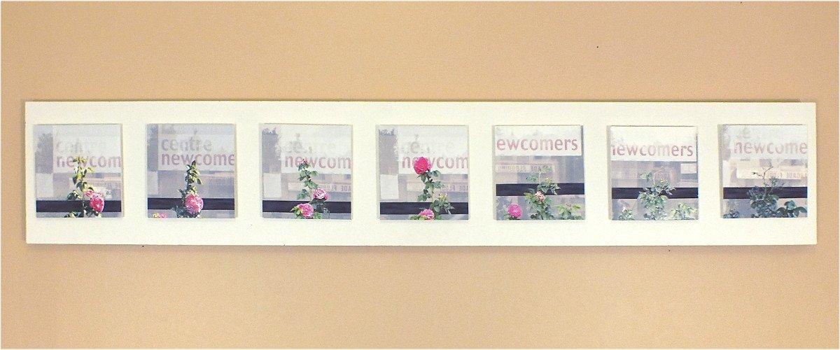 Untitled – Rose & Frame ( Part, 08 – 14 )