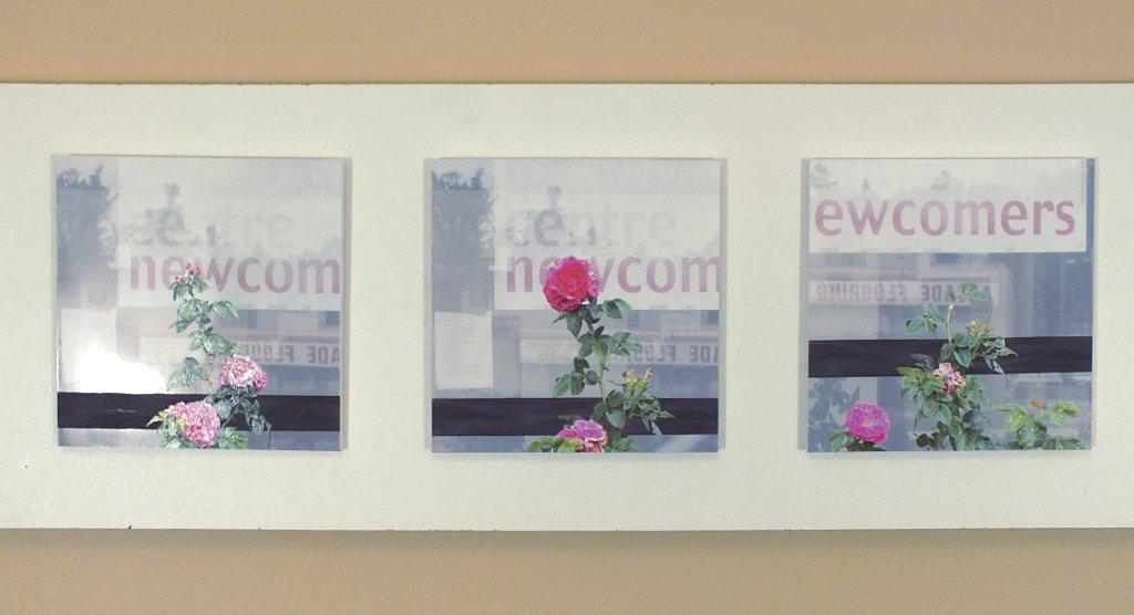 Untitled - Rose & Frame ( Part, 08 - 14 ) 10,11,12
